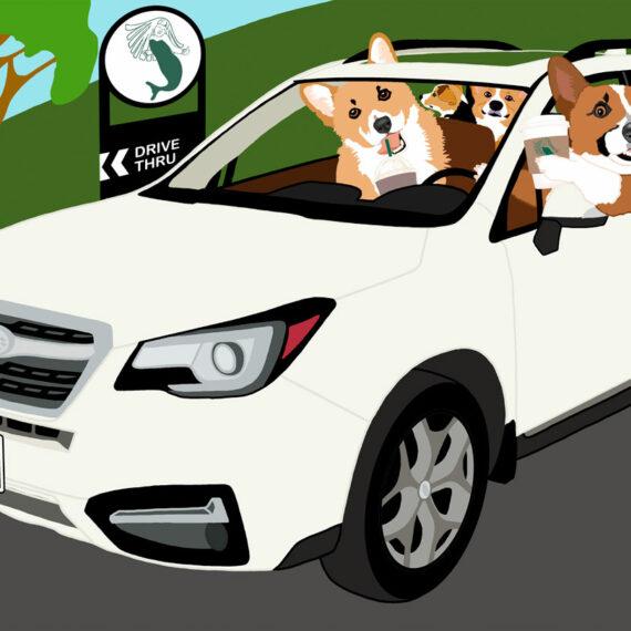 Corgis in Cars Getting Coffee - Subaru Edition (278)