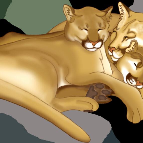 Motherhood Mountain Lion (048)